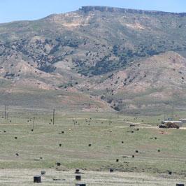Uranium Field